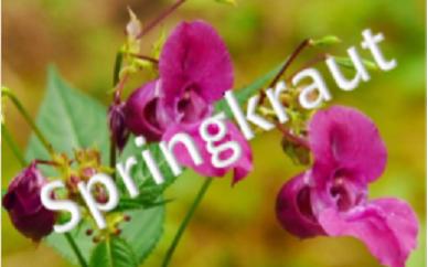 Springkraut2018