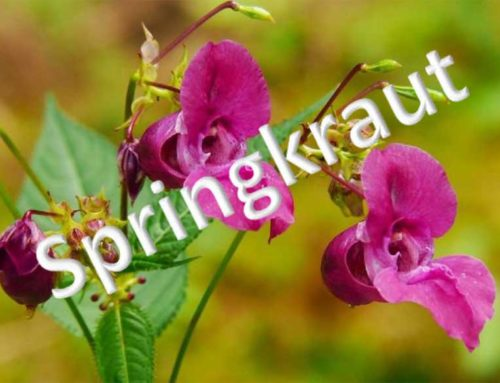 Springkrautaktion am 24. Juli